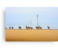 Canadian Geese Rock Harbor Cape Cod Canvas Print