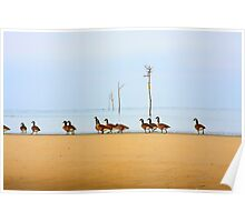 Canadian Geese Rock Harbor Cape Cod Poster