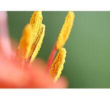 Bright Photographic Print