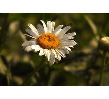 Front Yard Daisy Photographic Print