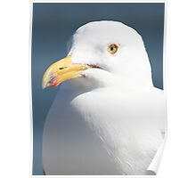 Gull Portreture Poster