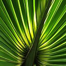 Palm Light by Rebecca Cruz