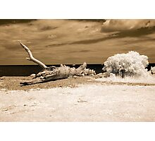 Infrared Driftwood Photographic Print