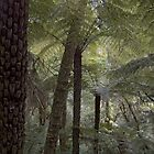 dandenongs by Jarrod Hall