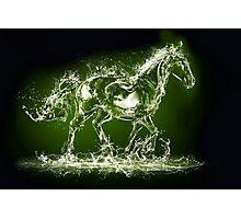 Horse! SALE! Photographic Print
