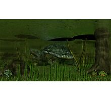 Snapping Turtle Photographic Print