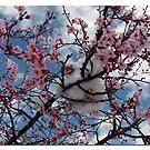 Snow Blooms by Nikki Collier