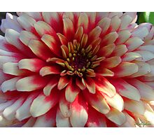 A Pretty Flower  Photographic Print