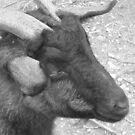 Goat! by MaddyPaddy