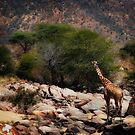 Dry Creek Giraffe by Scott Ward