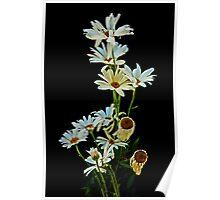 Dozen Flowers Poster