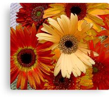 Mixed Colours Gerbera Jamesonii - Daisies Canvas Print