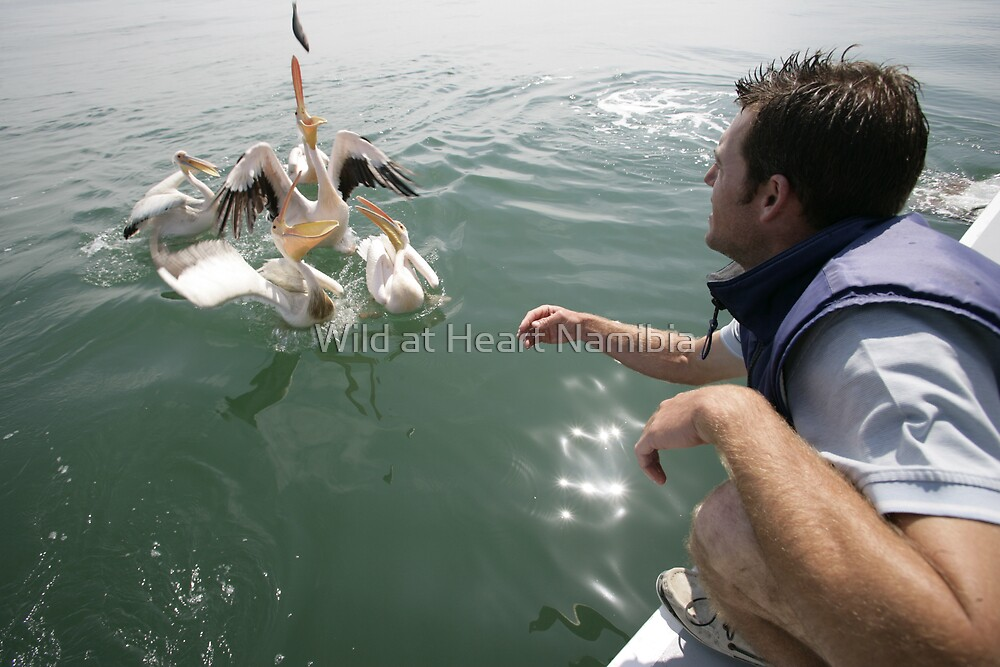 Exploring the amazing bird life in Walvis Bay and on the Skeleton Coast by Wild at Heart Namibia