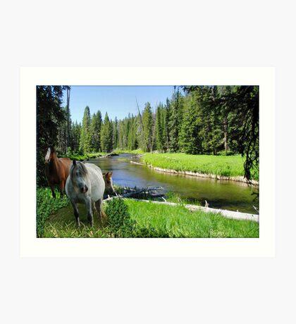 949-Wild River Horses Art Print
