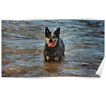 FIDO IN FOR A DIP Poster