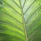 Palm by AllyNCoxon
