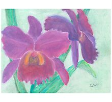 Beautiful Purple Orchid - Oil Pastel  Photographic Print