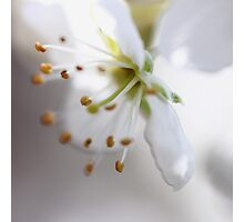 ~ Printemps :~: Spring  - JUSTART © Photographic Print