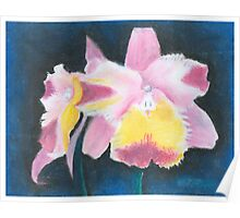 Beautiful Yellow and Pink Orchid - Oil Pastels Poster