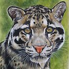 Berry&#x27;s Clouded Leopard by BarbBarcikKeith