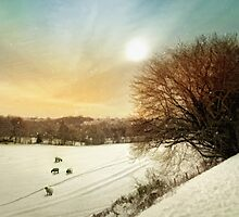 Snow fields by Lyn Evans