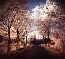Winter wonderland by Karin Elizabeth
