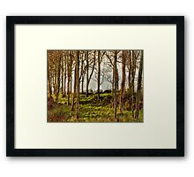 Trees in Skibbereen Framed Print