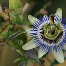 Passiflora: full of passion by Glitter