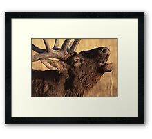 Portrait of a Bugler Framed Print