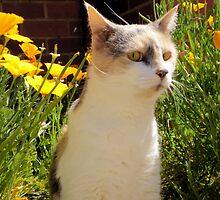 garden cat by ashroc