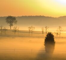 Pasture and Fog by Michael  Dreese