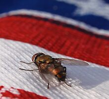 Fourth of July Fly by Megan Martin