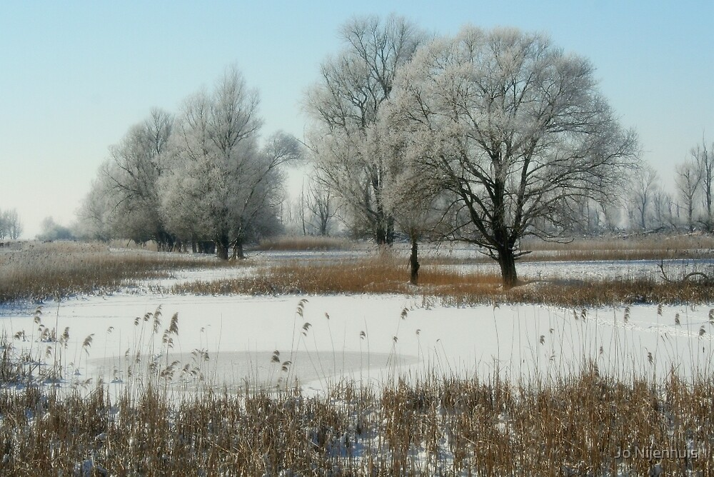 Winter Wetland The Oostvaardersplassen by Jo Nijenhuis