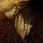 thawing petals by Hannah Grubb
