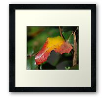 Colours... Framed Print