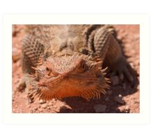 Central Bearded Dragon Art Print