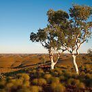 Two Snappy Gums by Blue Gum Pictures