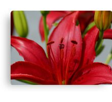 Deep Red Lily Macro Canvas Print