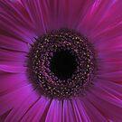 Gerber in pink by Maureen Brittain