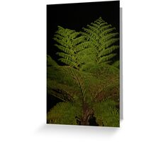 Fern in the Night Greeting Card