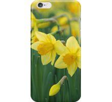 Daffodils. iPhone Case/Skin