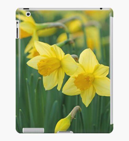 Daffodils. iPad Case/Skin