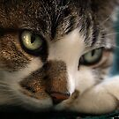 Kitty Kat by Kimberly Palmer