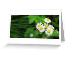 Small Wonder... Greeting Card