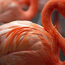 Flamingo Curves by bouldercreek