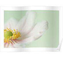 Japanese Anemone Mint. Poster