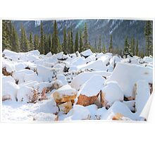 Among the Rocks: Autumn Snow in The Rockies Poster