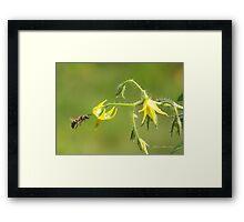 Pollen Seeker Framed Print
