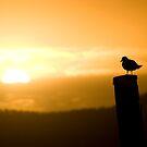 Resting Seabird by Craig Scarr