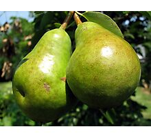Pear Derriere's Photographic Print